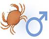 Yengeç Burcu - Yengeç Burcu Erkeği Kadını Özellikleri ...  Yengec